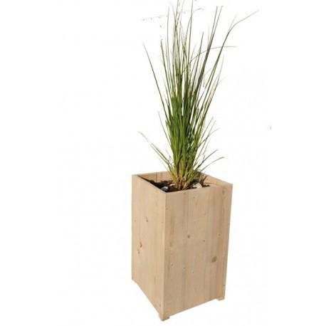 plante graminée